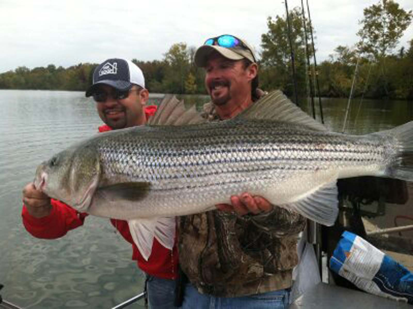 Trophy striper fishing nashville tennessee monster for Cumberland river fishing