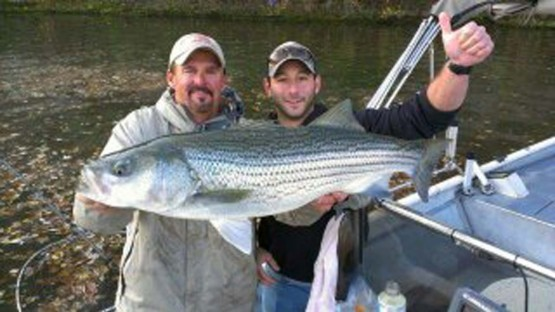 Trophy striper fishing nashville tennessee monster for Cumberland river fishing report