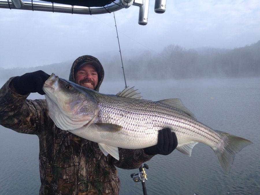 Trophy Striper Fishing Nashville Tennessee Monster