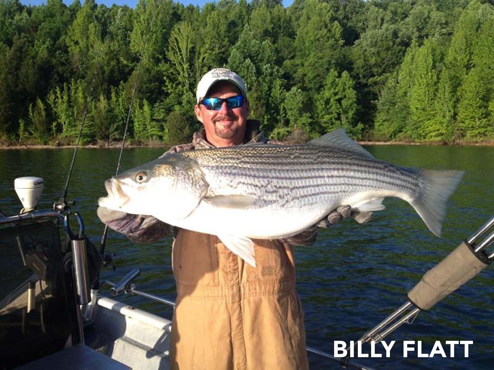Billy flatt fishing guide 2 nashville fishing charters for Tims ford lake fishing report