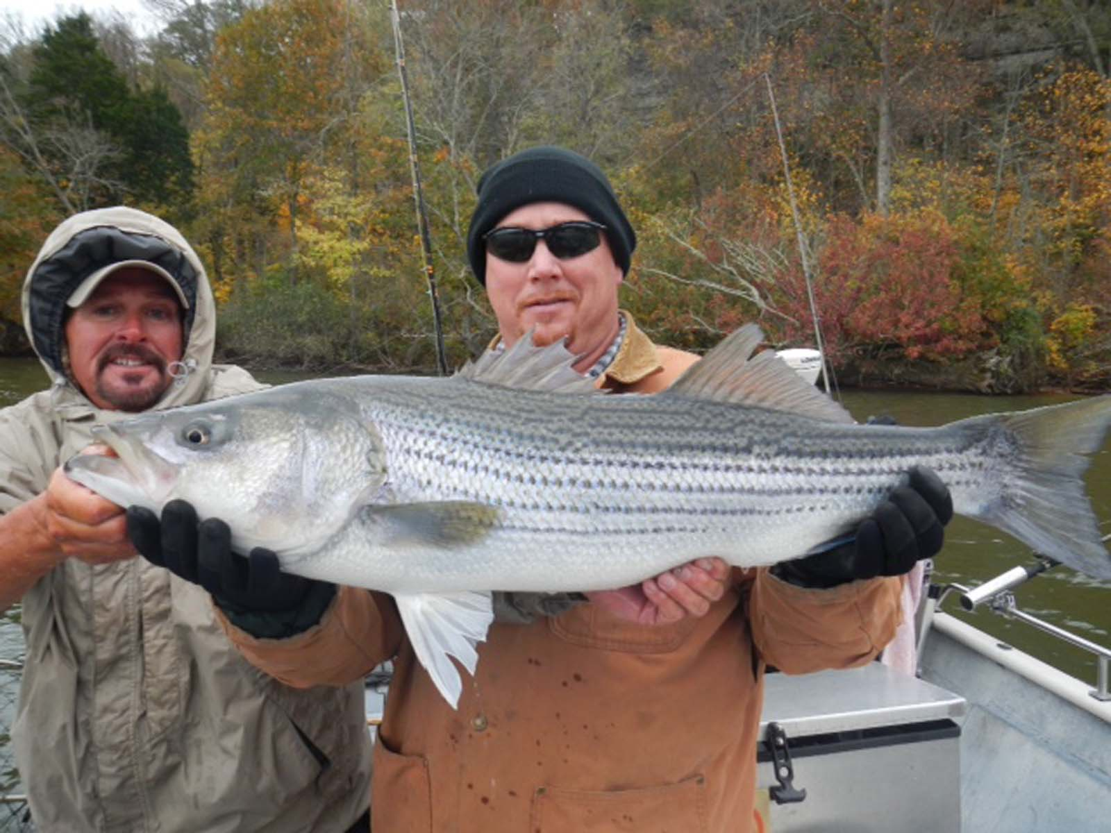 Cumberland river archives nashville fishing charters for Cumberland river fishing report
