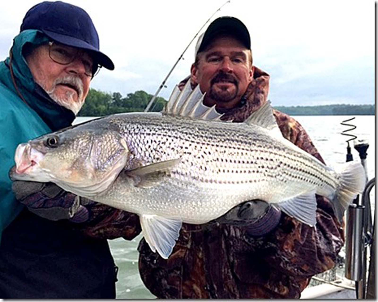 Percy Priest Lake - Nashville TN Striper Fishing with Billy Flatt